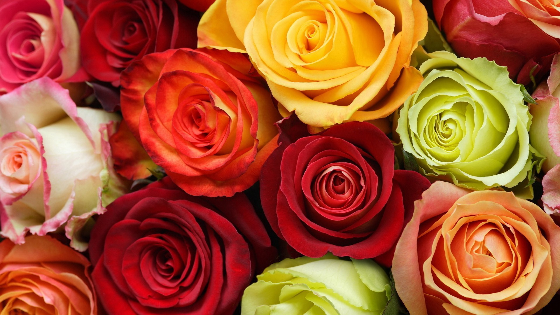 Roses: The Meanings of The Colors! – Flower Store Blog